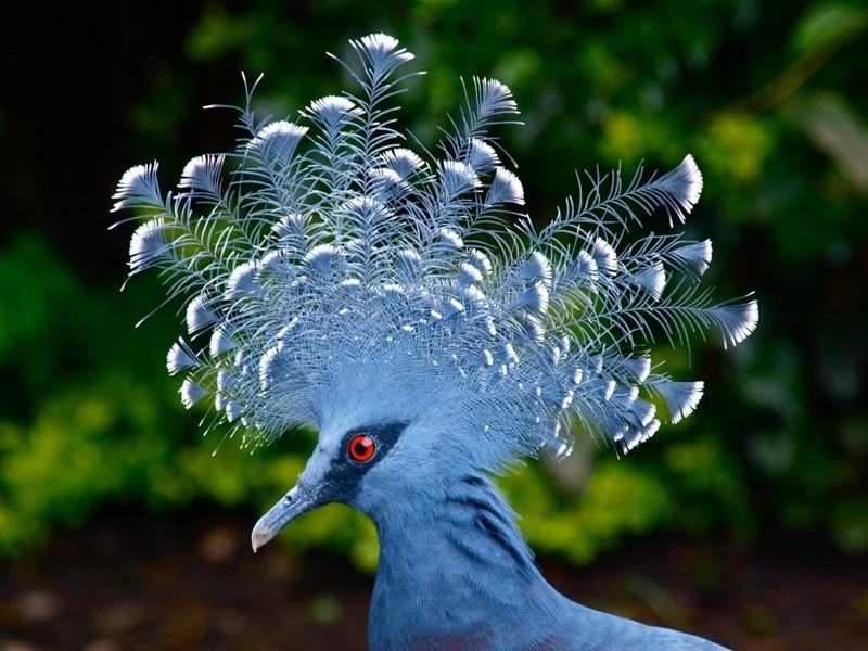 10 странных птиц, в существование которых сложно поверить интересное, природа, птицы