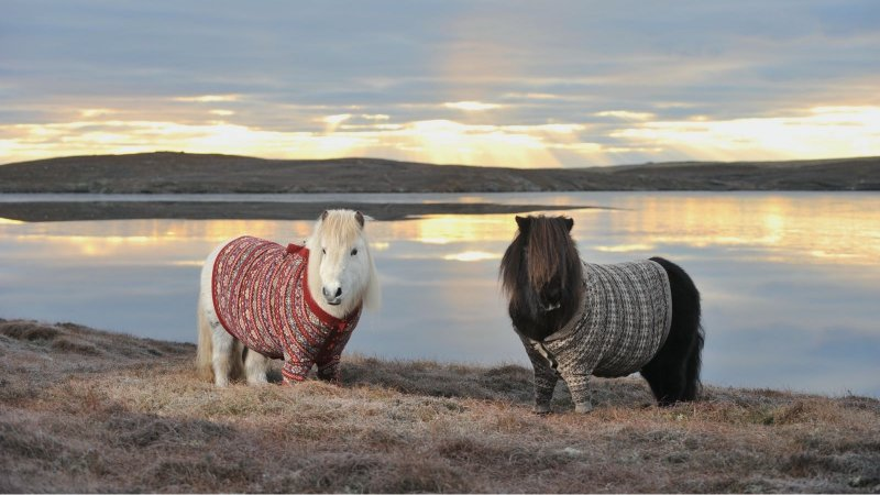 Конь в пальто и другие животные-модники животные, животные в одежде, конь в пальто