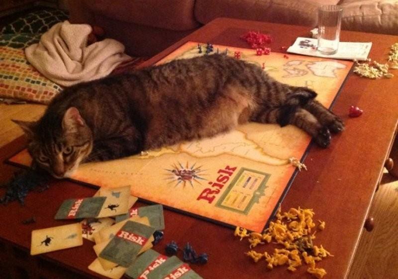 …ни поиграть в настольные игры… кот, котики, прикол, юмор