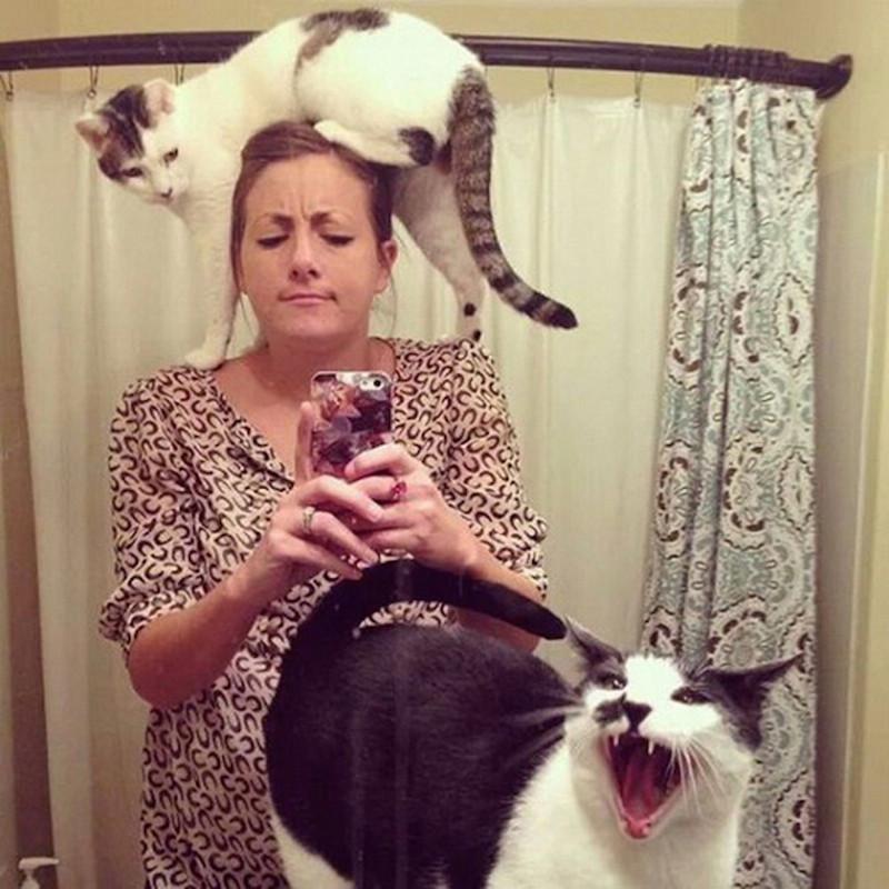 Впрочем, кто здесь хозяин ещё большой вопрос. кот, котики, прикол, юмор