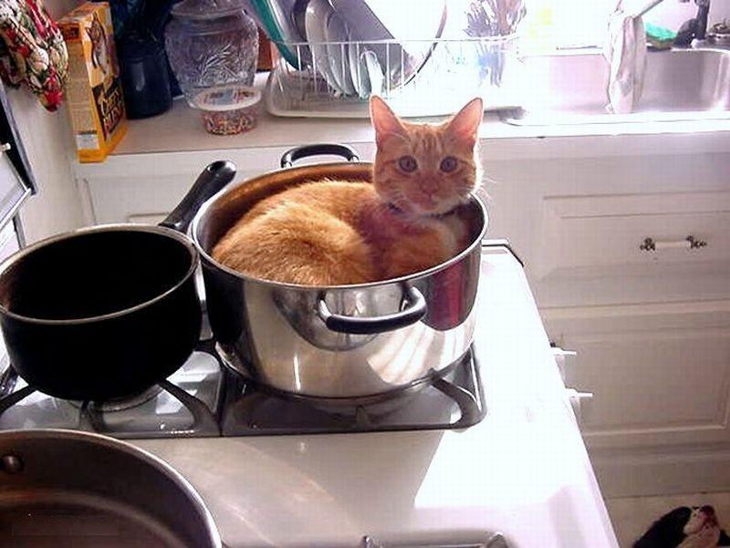 — Ты хотела готовить? Что ж, а я хочу лежать. кот, котики, прикол, юмор