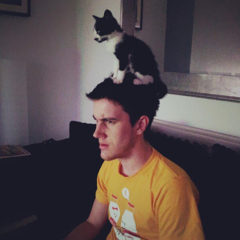 …или на голове у хозяина. кот, котики, прикол, юмор