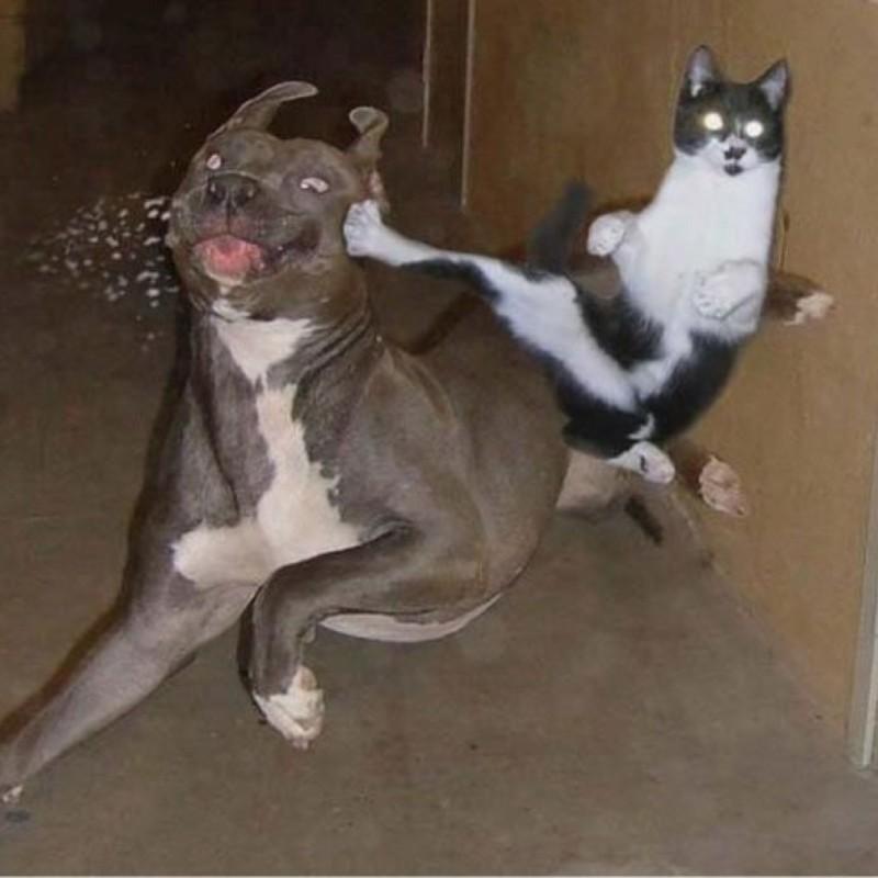 А иногда доходит и до серьёзного рукоприкладства. Или, скорее, лапоприкладства? кот, котики, прикол, юмор