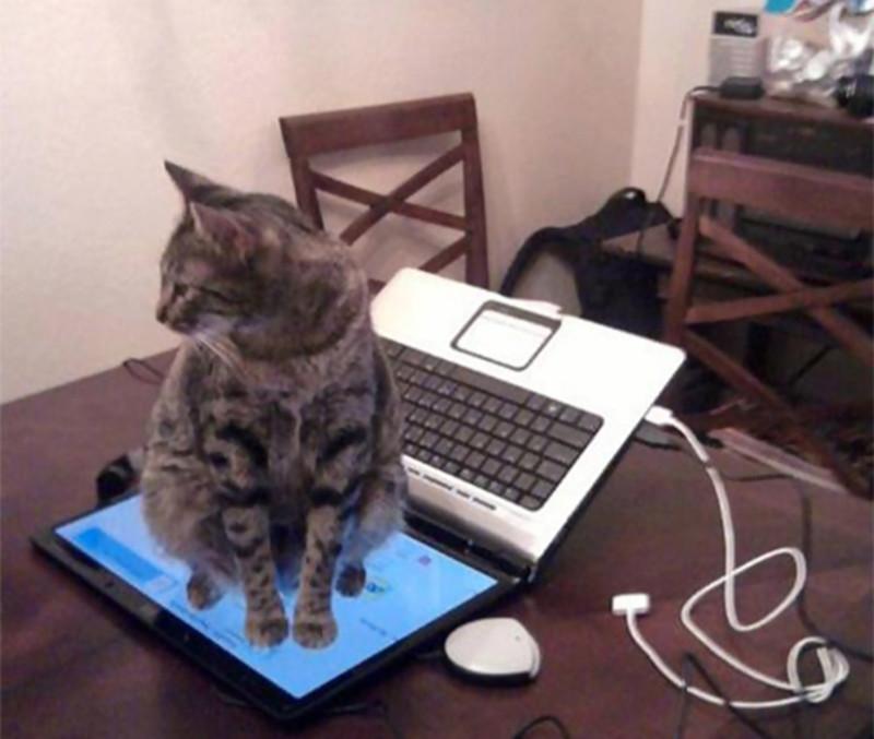 А самое главное, что с котиком совершенно невозможно договориться. Ты просил не садиться на клавиатуру? Да пожалуйста. кот, котики, прикол, юмор