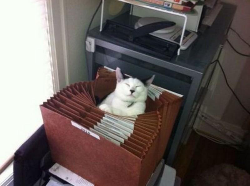 О какой-то работе рядом с котиками можно вообще забыть. кот, котики, прикол, юмор