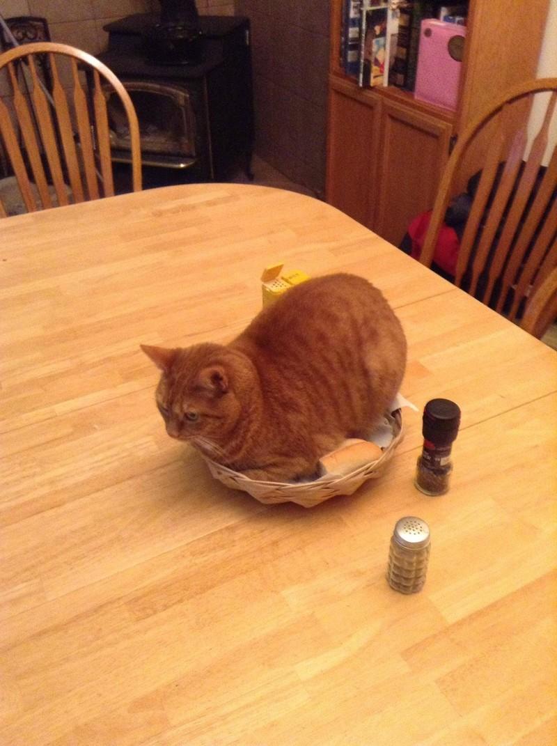 Вообще, котик в доме имеет право занять любое место, которое посчитает нужным. кот, котики, прикол, юмор