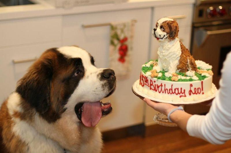 Похож! день рождения, животные