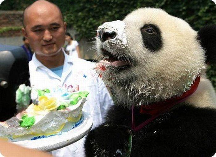 ...очень странные день рождения, животные