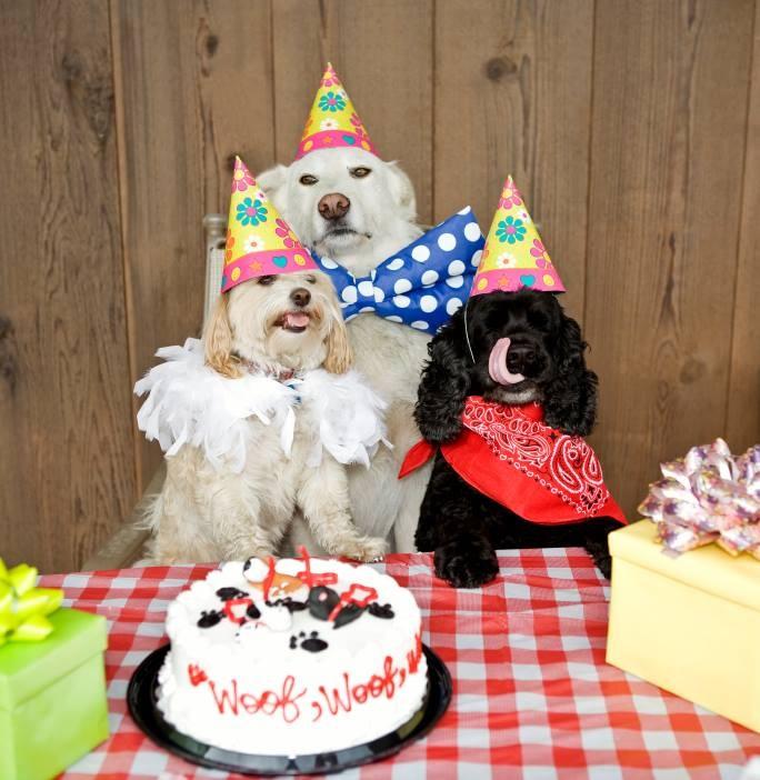 Хорошо, когда друзья рядом день рождения, животные