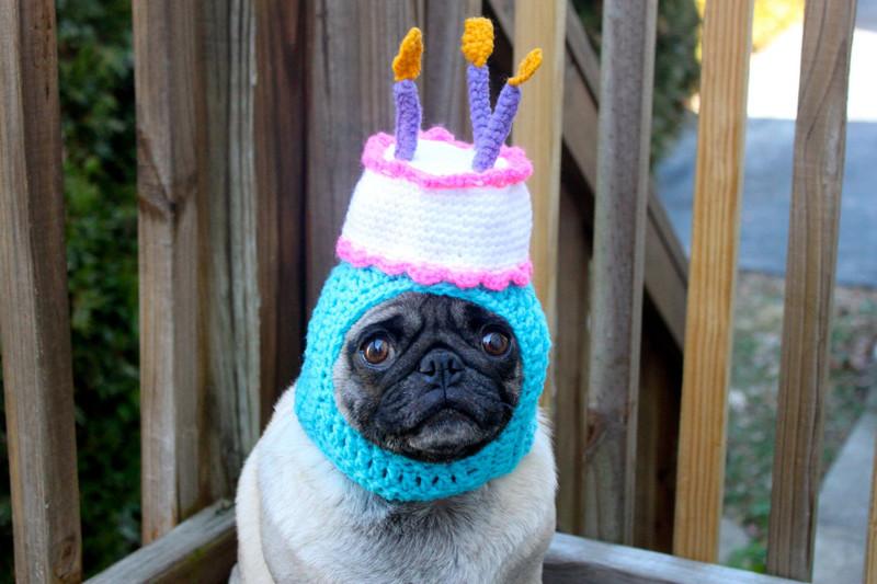 Да уж, хозяин, фантазия у тебя так себе день рождения, животные