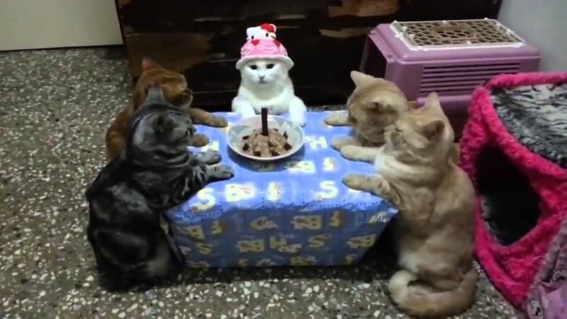 Праздник с друзьями, всё как полагается день рождения, животные