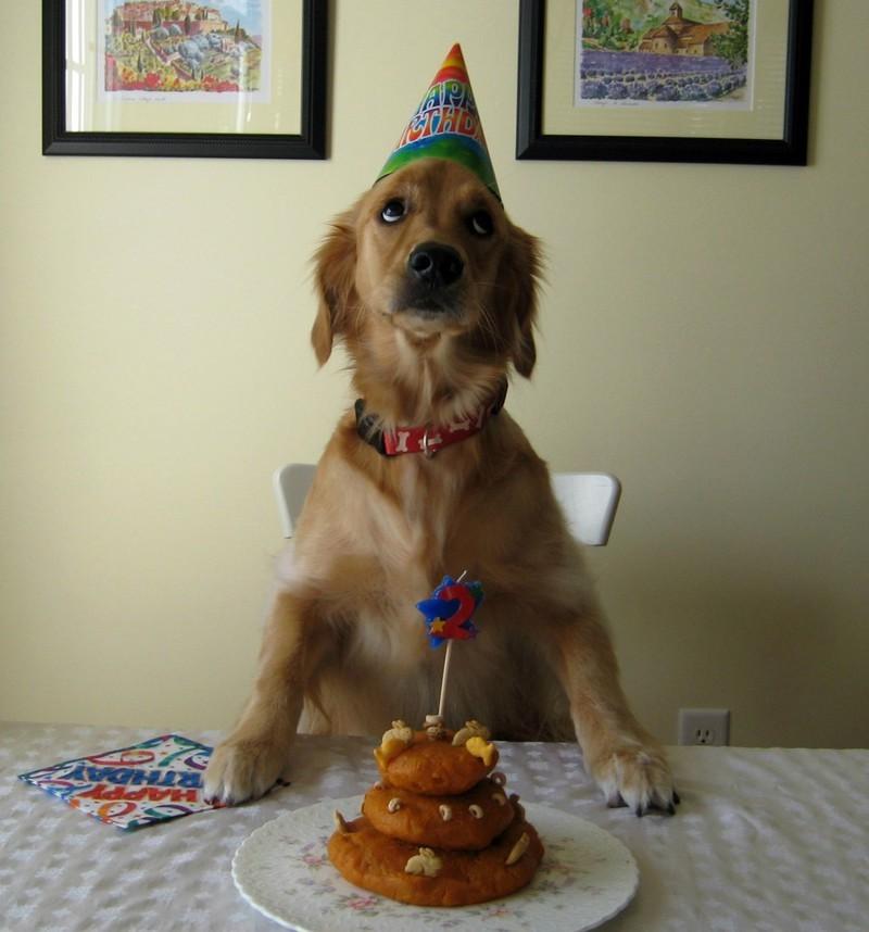 Ох, ребята, ну не стоило… день рождения, животные