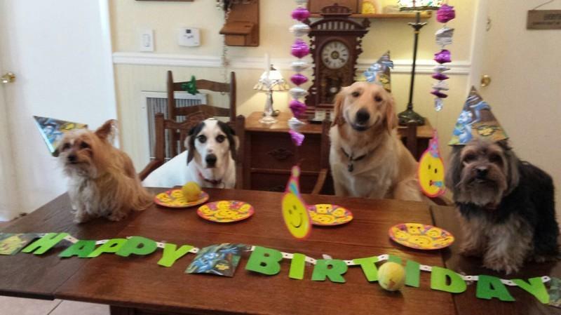 Весёлая компания день рождения, животные