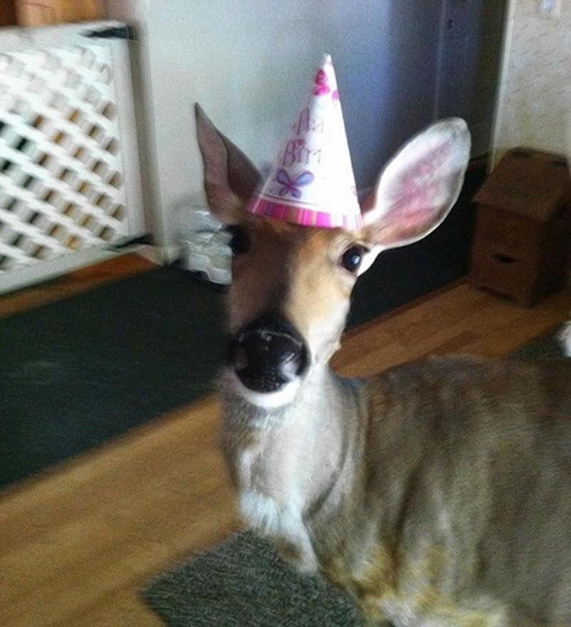 Впрочем, иногда именинники бывают странные день рождения, животные