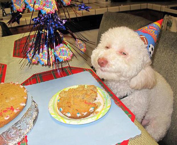 Кексики, похоже, необычные были... день рождения, животные
