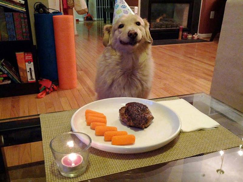 Скромный праздничный ужин день рождения, животные
