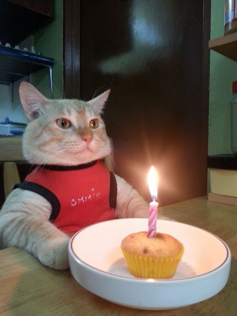 Первый день рождения день рождения, животные