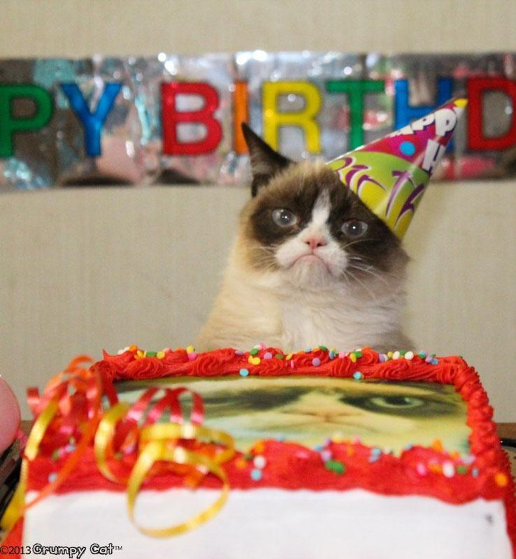 День рождения самого грустного кота в мире день рождения, животные