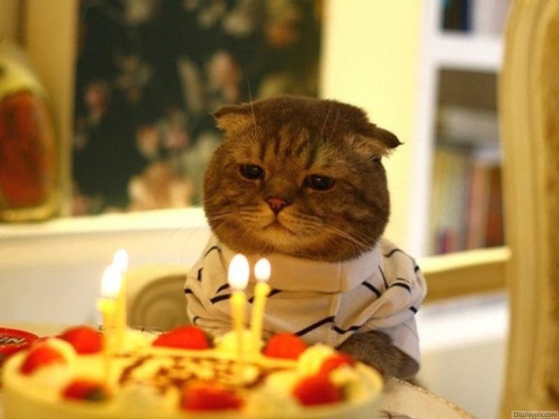 А этот парень, видимо, подарком не впечатлён... день рождения, животные