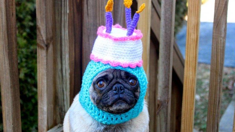 20 животных, которые тоже любят праздновать день рождения день рождения, животные