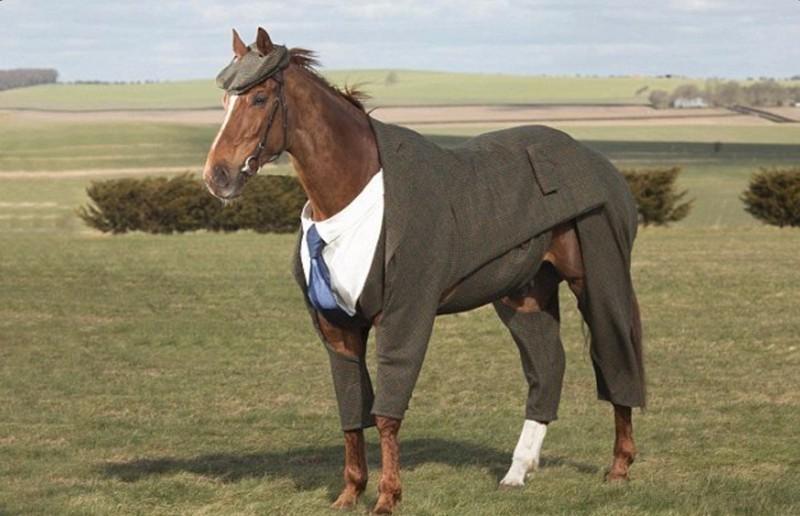 А вот кони любят носить не только пальто, но и другие виды одежды. животные, животные в одежде, конь в пальто