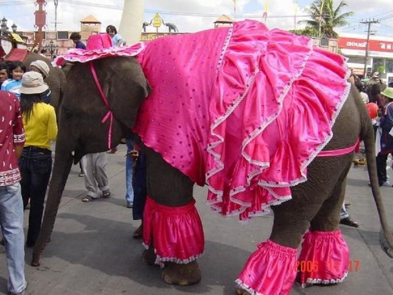 И даже большие слоны в одежде выглядят очень круто. животные, животные в одежде, конь в пальто
