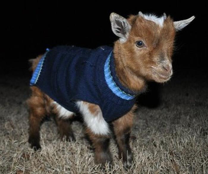 Особенно малыши. животные, животные в одежде, конь в пальто