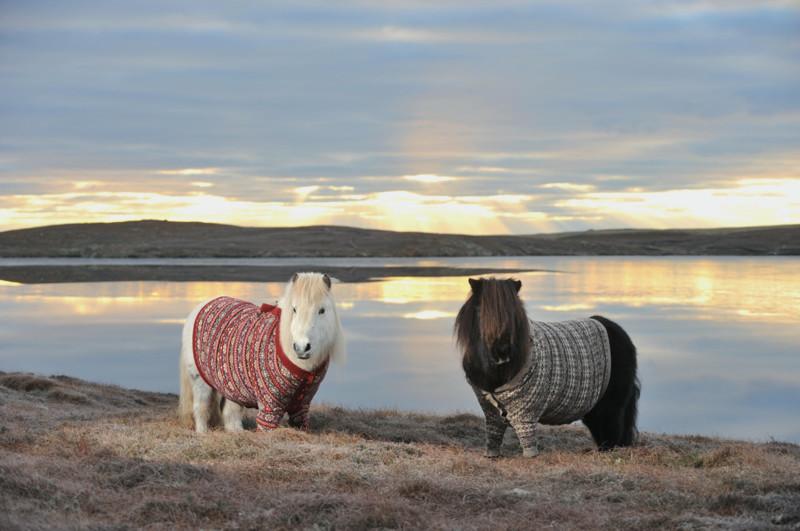 Одежду любят не только большие лошадки, но и маленькие. животные, животные в одежде, конь в пальто