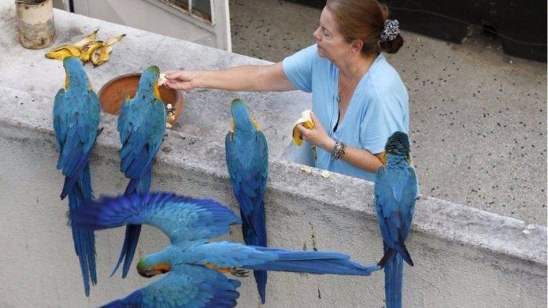 Как выглядят «голуби» в разных странах мира голуби, животные, прикол, юмор