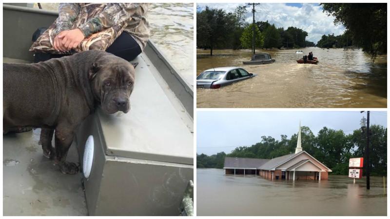 Измученная собака много часов боролась за свою жизнь и была спасена бедствие, луизиана, наводнение, спасатели, спасение животного