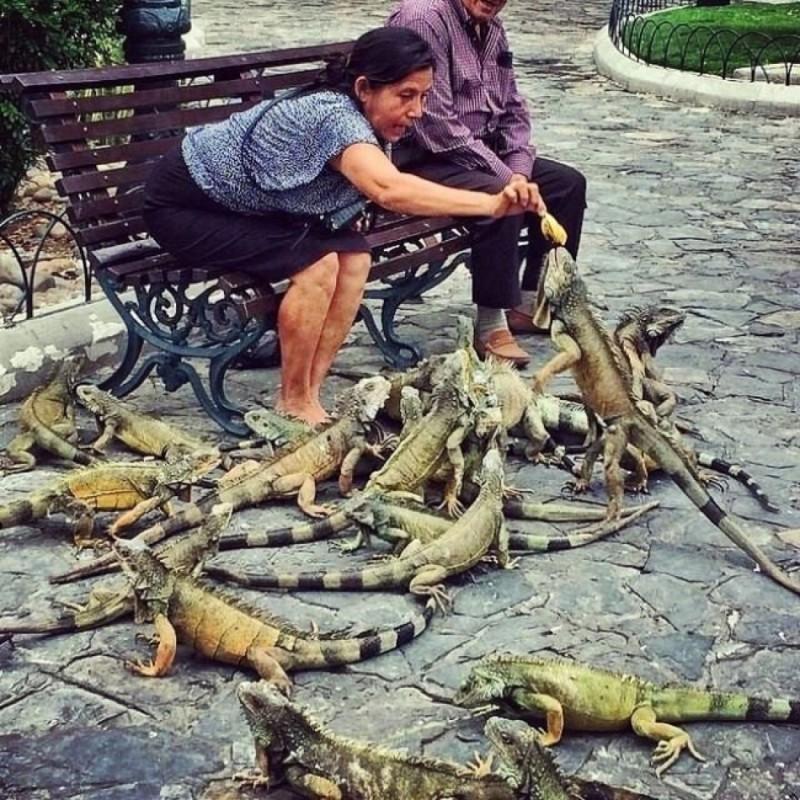 Голуби в эквадоре. голуби, животные, прикол, юмор