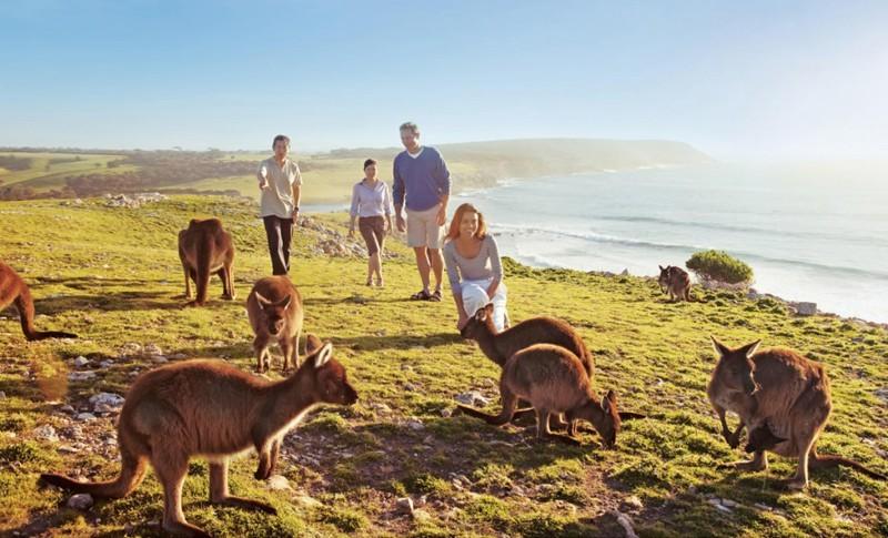 Думаете снова Австралия? Как бы не так! Это Ирландия. На острове Ламбей там действительно много валаби. голуби, животные, прикол, юмор