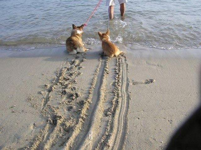 Забыл снять с ручника  животные, собаки.вода