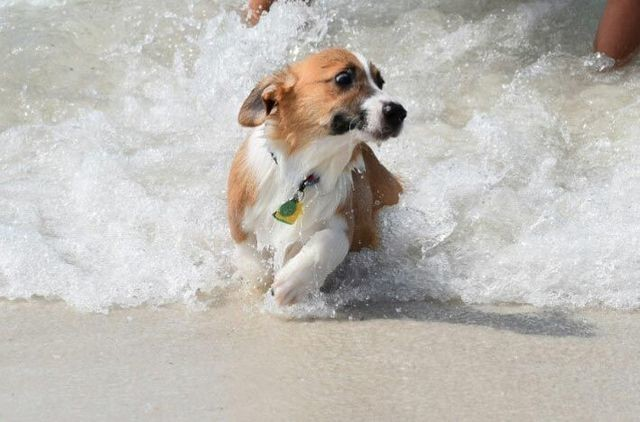 «Спасайся кто может!»  животные, собаки.вода