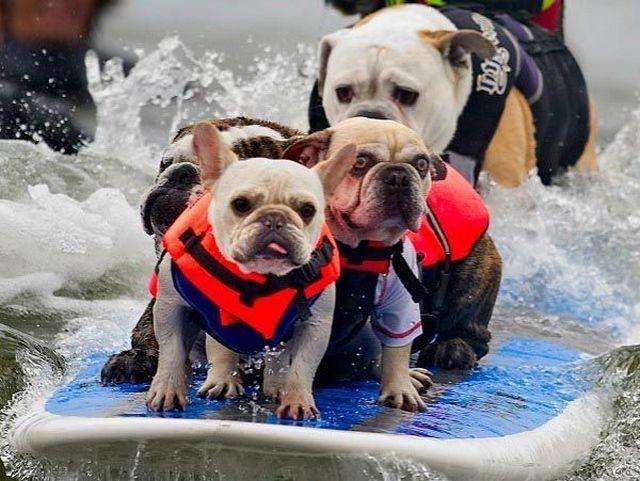 «Больше никогда тебя не буду слушать!»  животные, собаки.вода