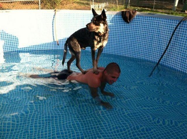 Островок безопасности  животные, собаки.вода