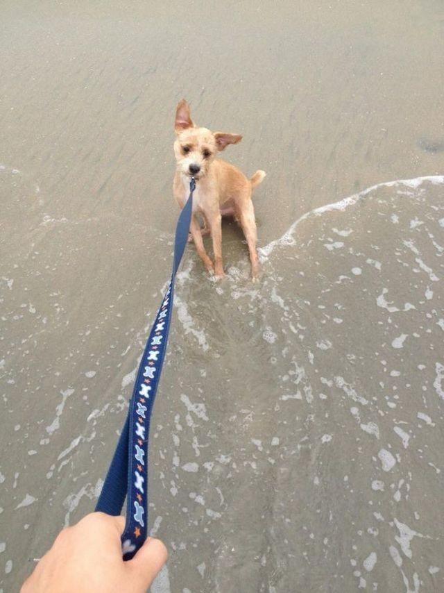 «Может, я вас на берегу подожду?»  животные, собаки.вода