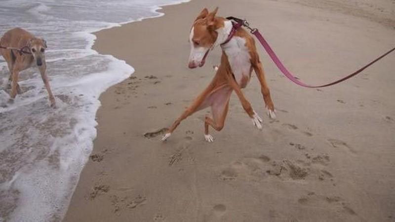 Вероломное нападение воды на собаку…   животные, собаки.вода