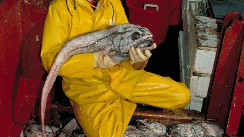 10 самых страшных чудовищ из океанских глубин глубоководные рыбы, монстры, рыбы