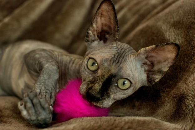 Все подозрительное будет поймано инопланетяне, коты, котята, кошки, сфинксы