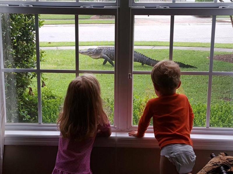 Дети наблюдают за тем, как на их лужайке играет бродячий пёс. бездомные животные, прикол, флорида, юмор
