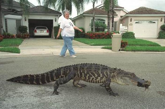 Женщина наблюдает как молодой пёс бегает возле её дома. бездомные животные, прикол, флорида, юмор