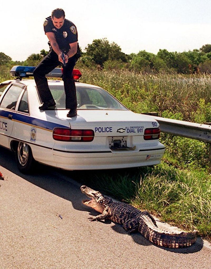 Полицейский пытается усмирить агрессивного пса. бездомные животные, прикол, флорида, юмор