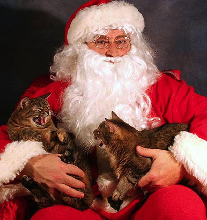 Когда на рождество встретился с родственниками, которых терпеть не можешь. котики, прикол, фото, юмор