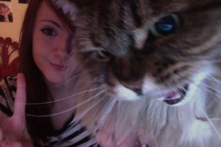 Котэ как бы угрожает: «Если эти фото утекут в интернет, тебе не жить!». котики, прикол, фото, юмор