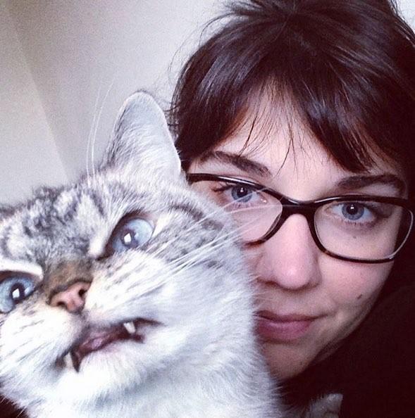 Граф Дракула переродившийся в кота. котики, прикол, фото, юмор