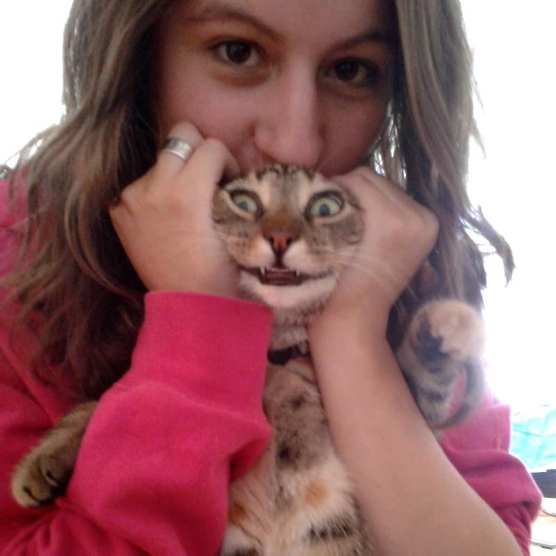Улыбочку. котики, прикол, фото, юмор