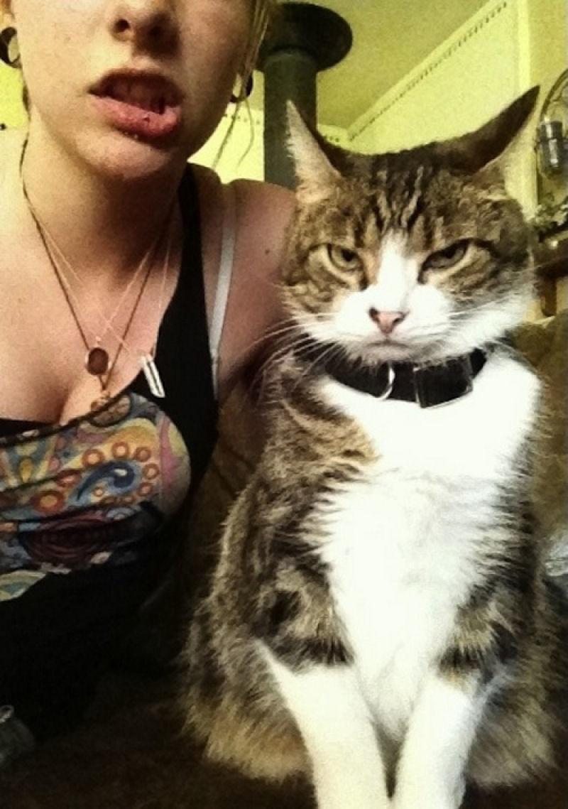 Этот котэ смотрит на нас как на… кхм… в общем свысока он на нас смотрит. котики, прикол, фото, юмор