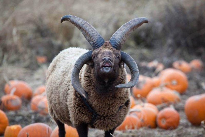 10 очень странных пород самых обычных животных животные, необычные животные, природа