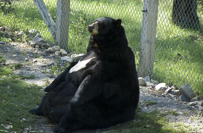 «Да ладно вам, я просто пушистый». животные, милахи, пухляки, толстяки